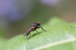 прогонване на мухи