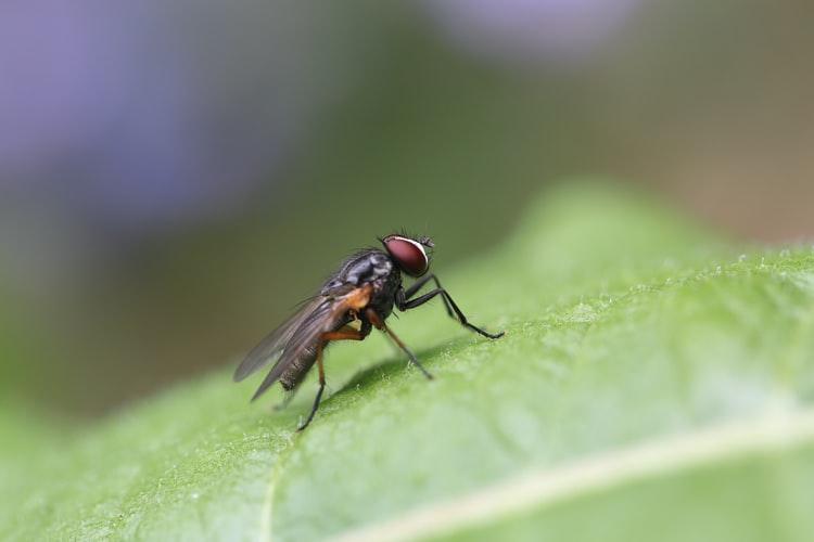 Как да прогоним мухите